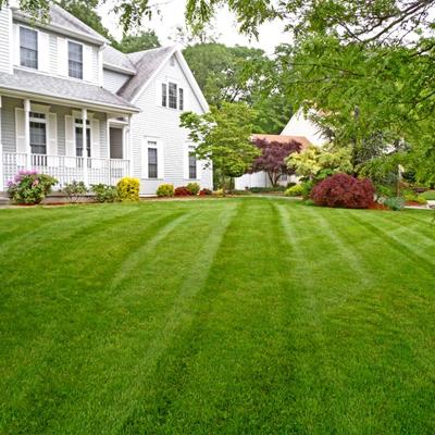 Рулонный газон у дома
