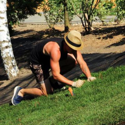 положить рулонный газон на участке