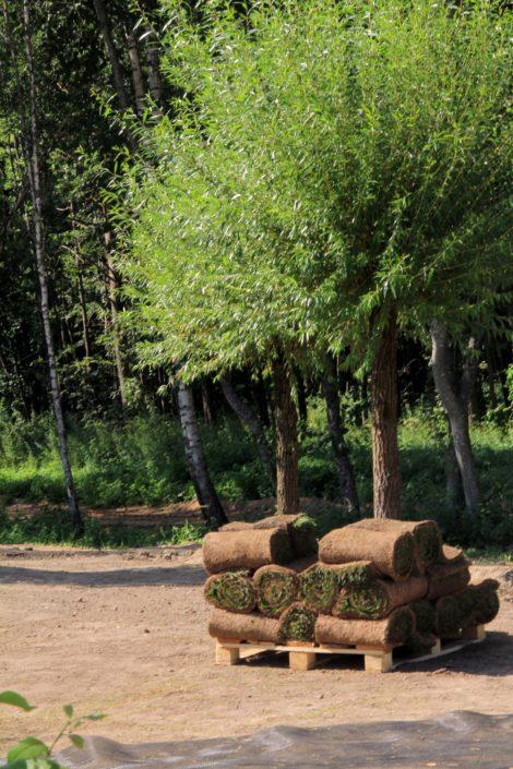 рулонные газоны в Минске