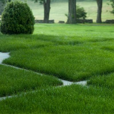изумрудный газон